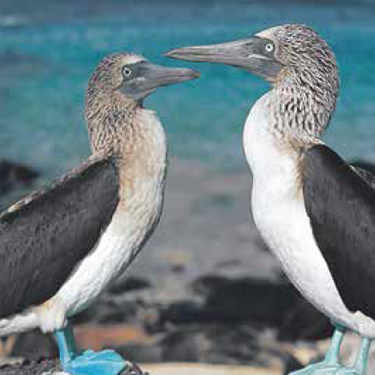 Wonders of the Galapagos Islands