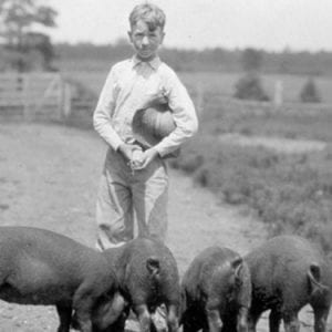 A Boy and His Hogs - B&W,Ralph Brown Draughon Library Special Collection and Archives