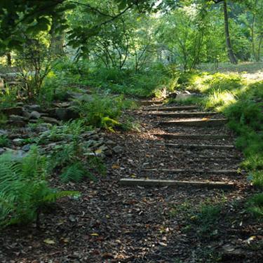 Davis Arboretum outdoor steps