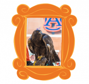 An Eagle in a picture Frame