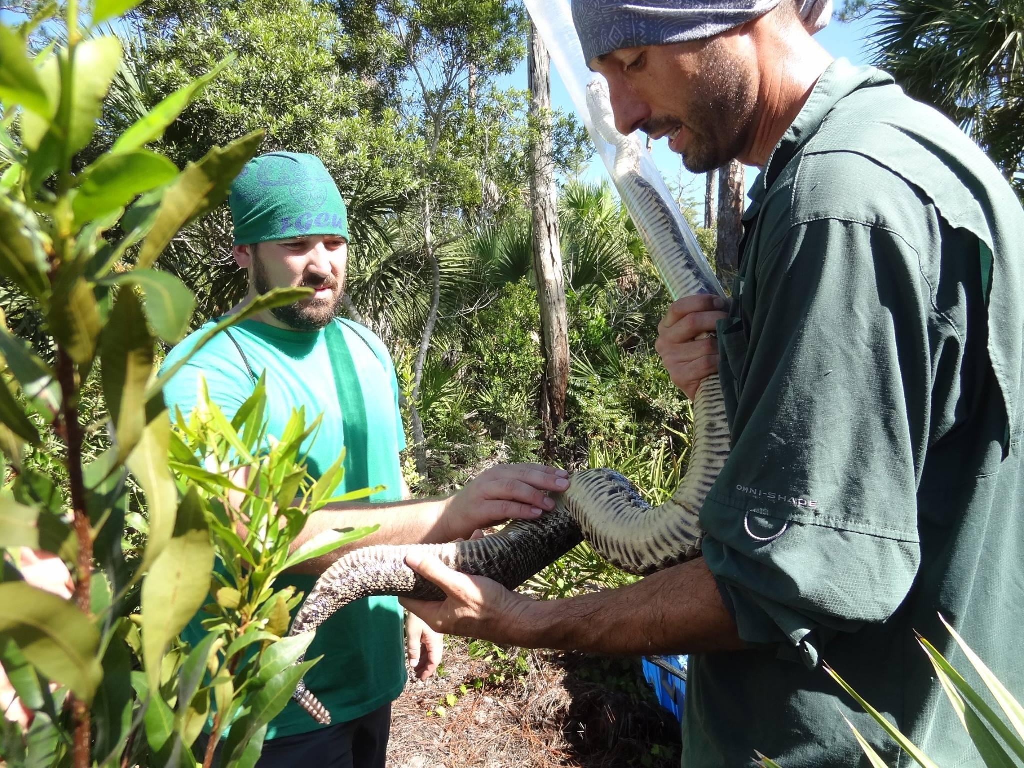 Metcalf capturing snake