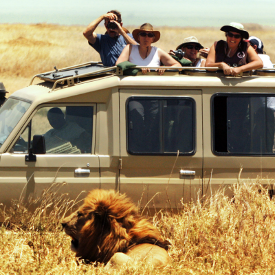 Photo of men in Jeep taking picture of lion