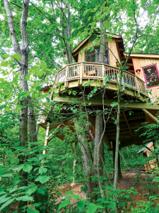 treehouse in the trees 2