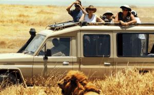 Tanzania Migration Safari lion in grass