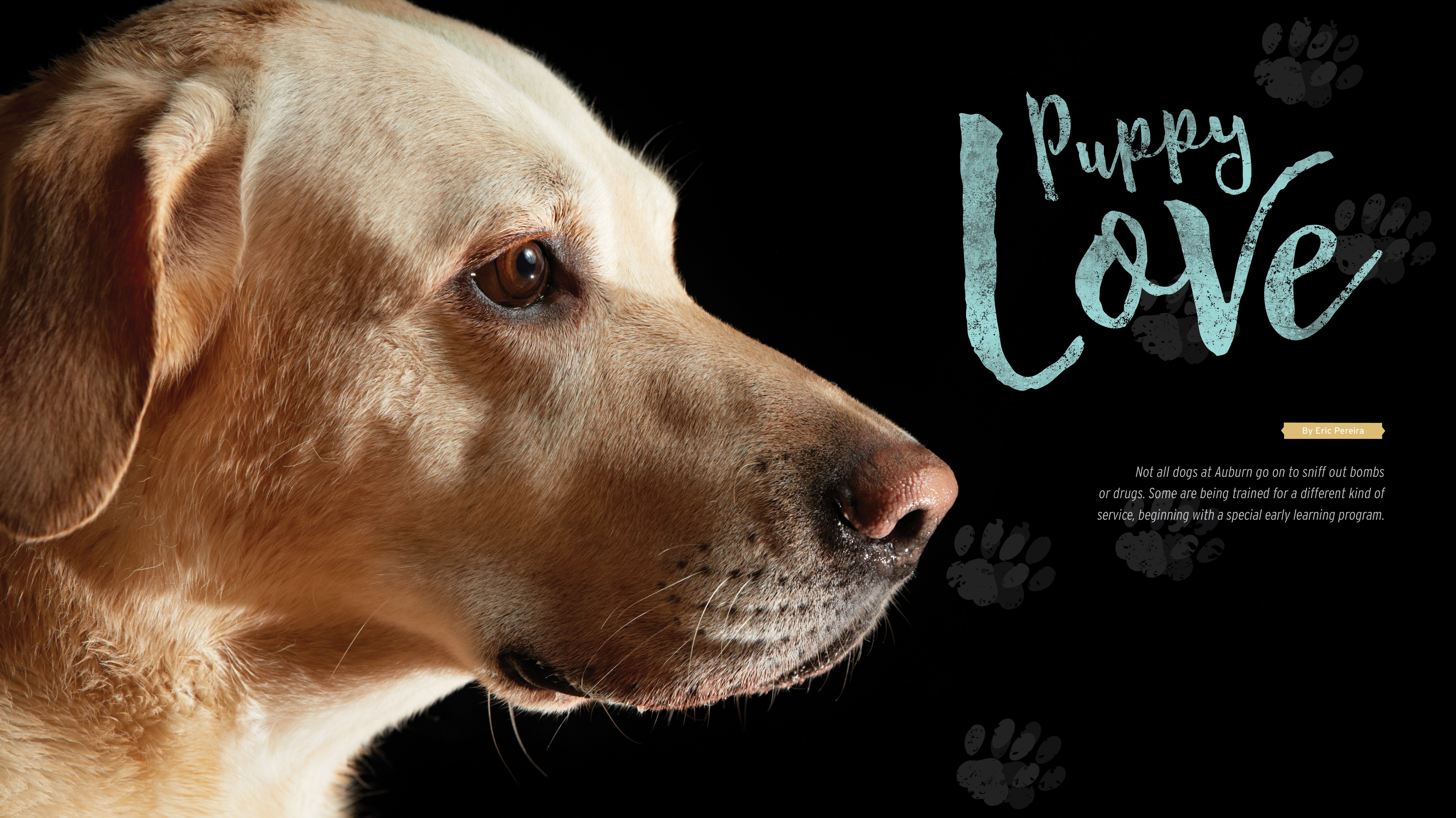 Puppy Love by Eric Pereira; Not all dogs at Auburn go on to sniff out bombs or drugs. Some are being trained for a different kind of service, beginning with a special early learning program.