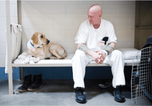 Golden Lab sitting with Inmate on a bed