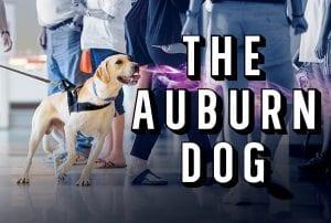 The Auburn Dog