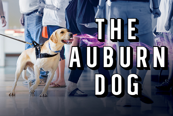 The Auburn Dog