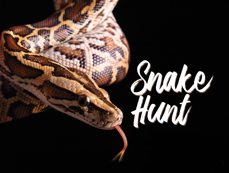 Python; Snake Hunt