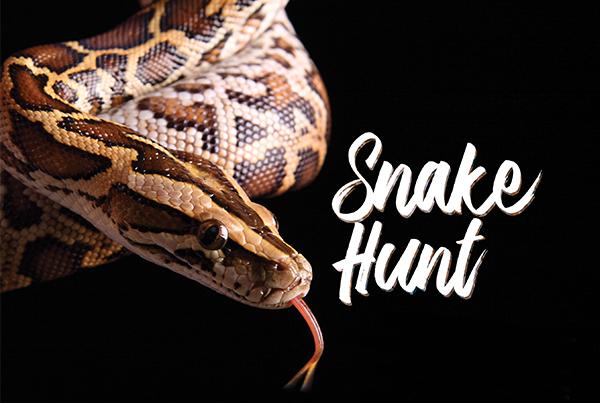 Snake Hunt; python