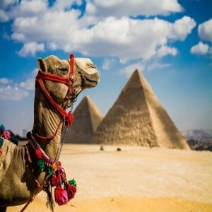 Nile War Eagle Traveler