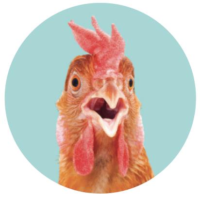 Shocked looking chicken