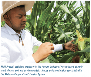 Rishi Prasad, assistant professor in the Auburn College of Agriculture's department of crop, soil and environmental sciences and an extension specialist with the Alabama Cooperative Extension System