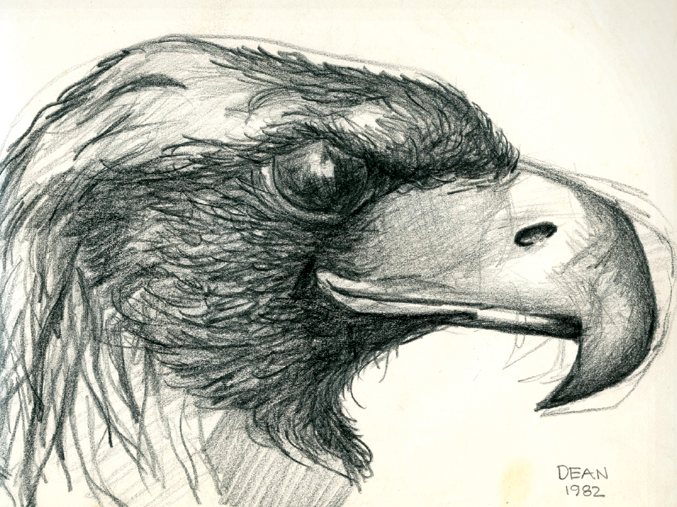 Eagle drawn by James Dean