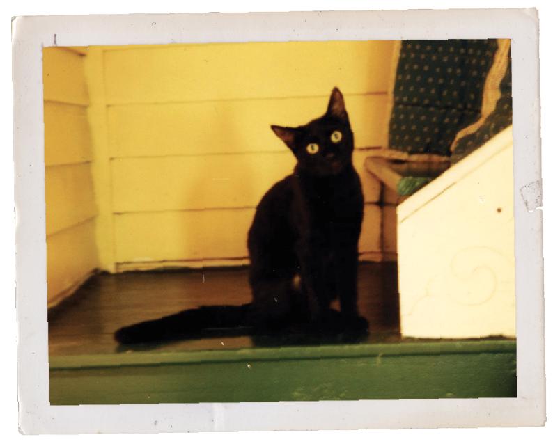 James Dean's cat Pete