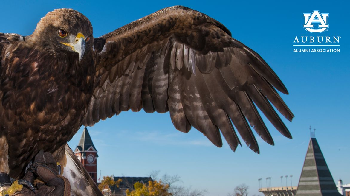 Zoom Eagle Background