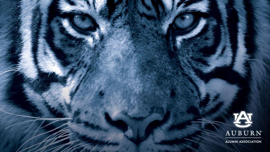 Tiger zoom background