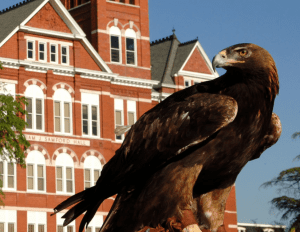 Eagle in front of Samford Hall