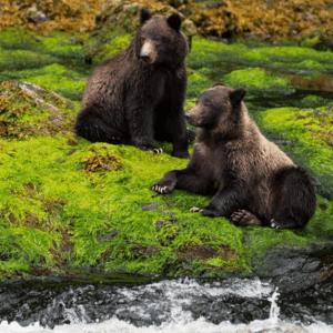 AlaskaGlacierBlooms