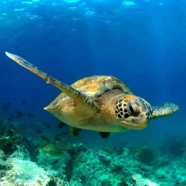 Wonders of Galapagos islands trip