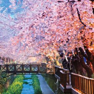 Japan in Bloom Trip