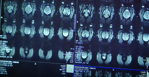 Brain scan of a dog