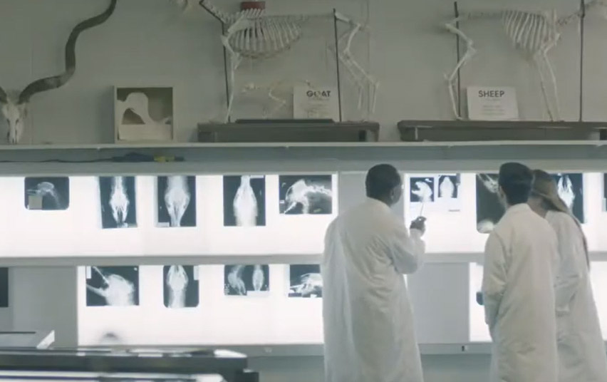 Vet Med students looking at animals xrays