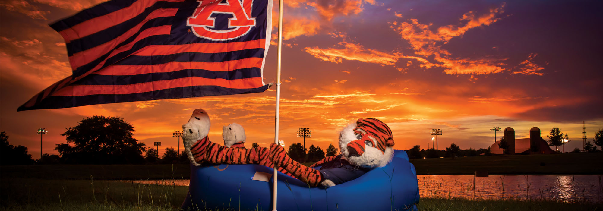 Aubie Passing the Time